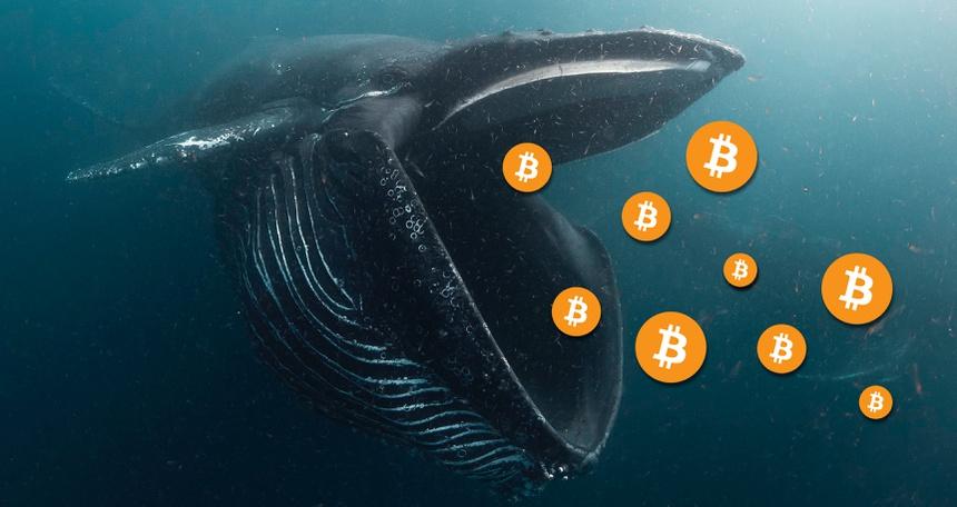 Thêm 'cá voi' Bitcoin thức giấc sau gần 9 năm không hoạt động